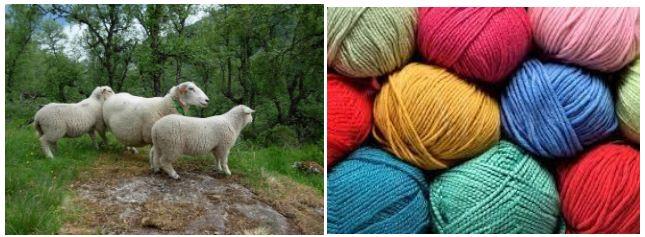 Len lông cừu thường