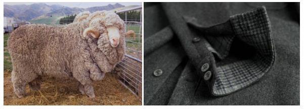 Len lông cừu merino